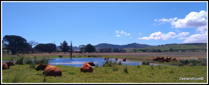 Stellenbosch Hills